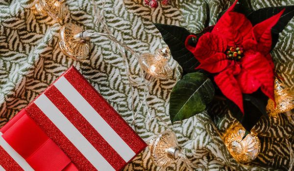 poinsettia-navidad-planta-roja-condis