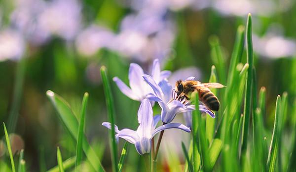 primavera-hora-condis