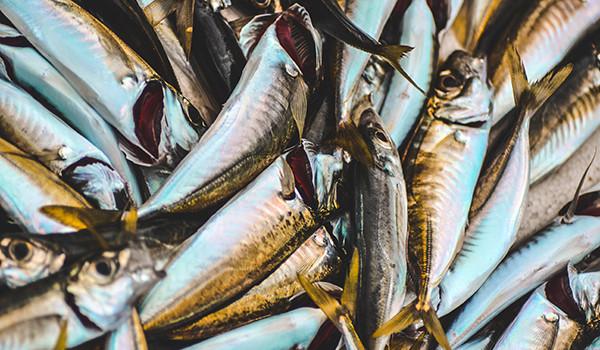 pescado-condis