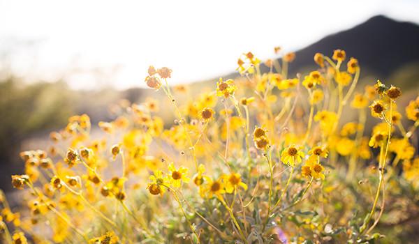 astenia-primaveral-alimentacion-condis