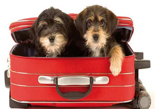 condis_viajar-con-mascotas