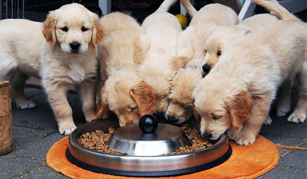 alimentos-perro-condis