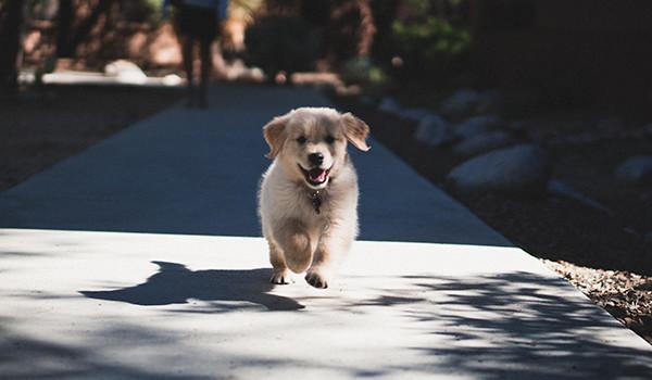 perro-running-correr-condis