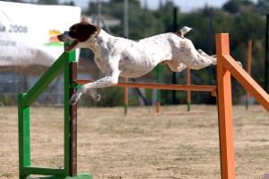 agility-1-1361063