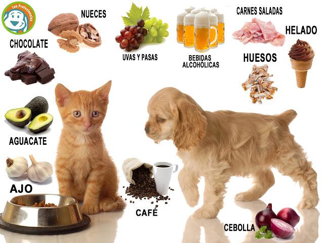 gato_y_perro_comiendo-JJJnormal