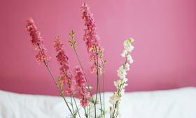 Condislife flores beneficios plantas