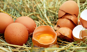 Condislife Numeración Huevos