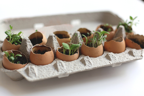 Condislife DIY huevos huerto