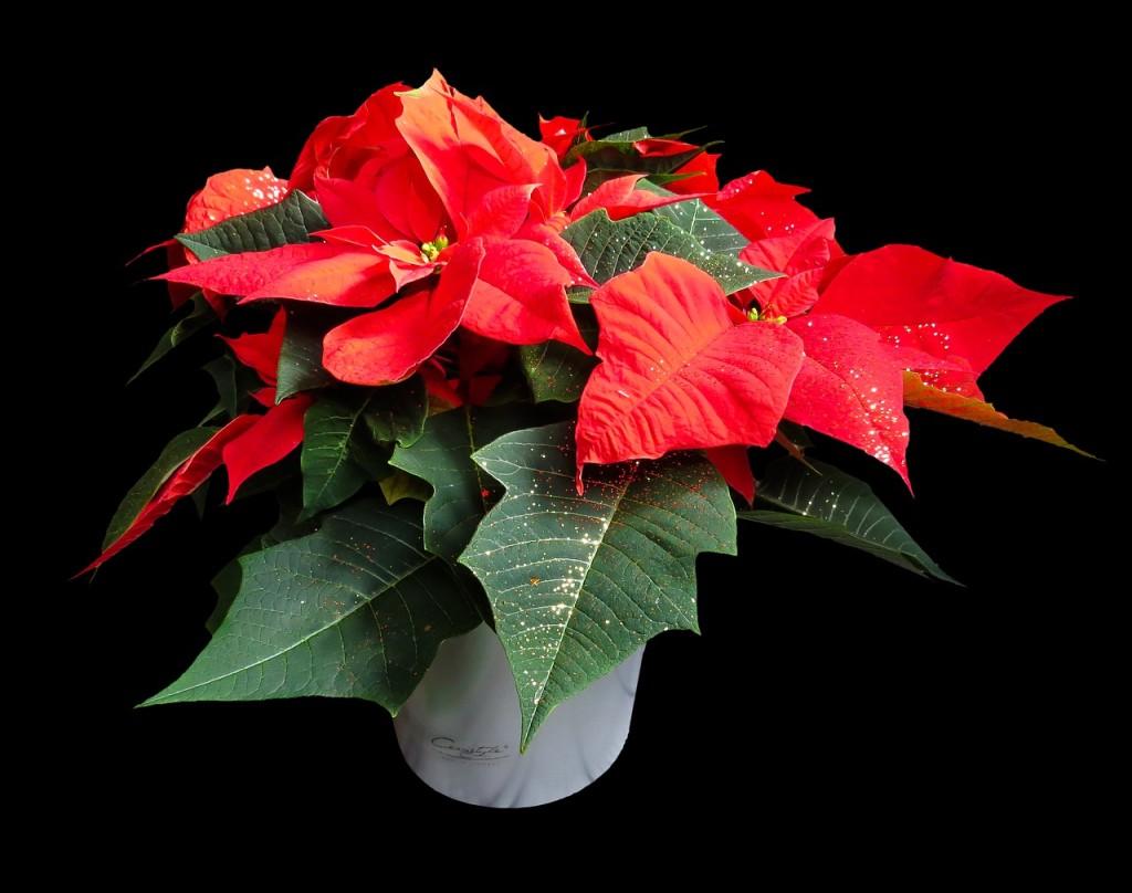 flower-1829702_1280