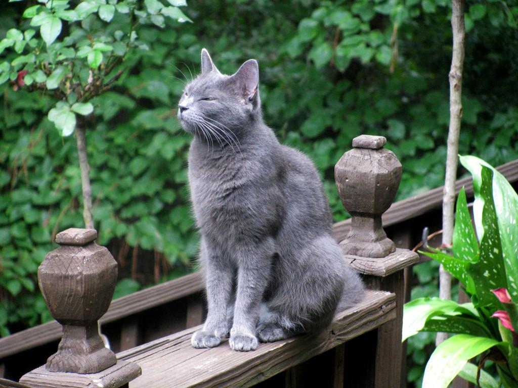 cat-762959_1920