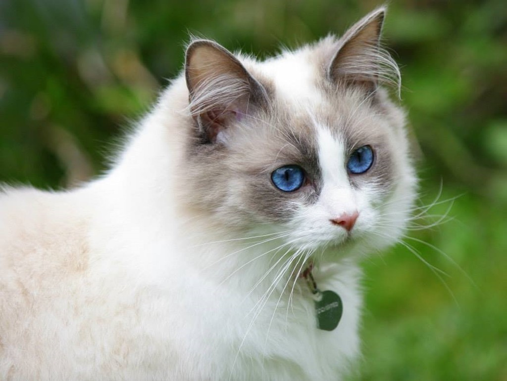 cat-pretty-2126692_1920
