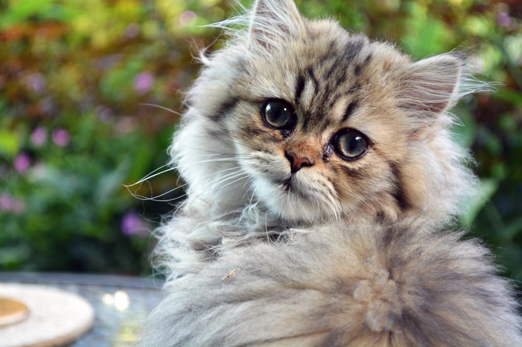 cat-831258_1920