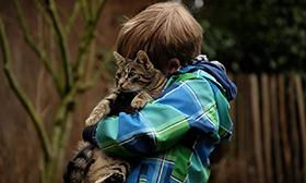 destacada gatos
