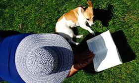destacada blog perros sol