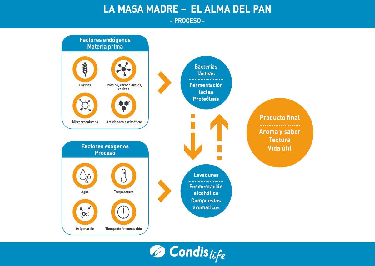 CONDIS masa madre cast (2)