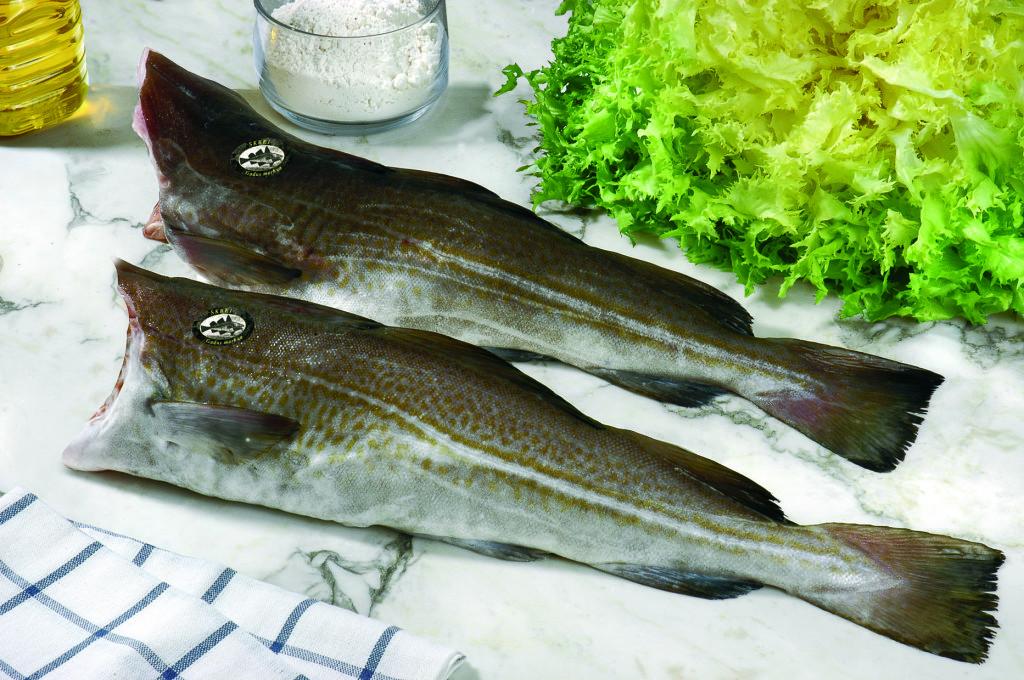 bacalao-SKREI-condis