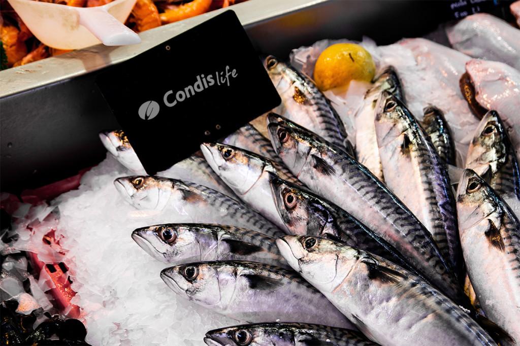 caballa-condis-pescado