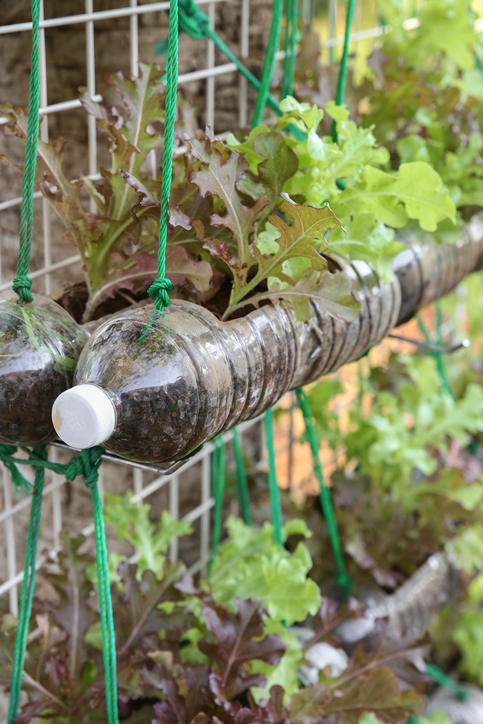 Como hacer un huerto vertical en casa