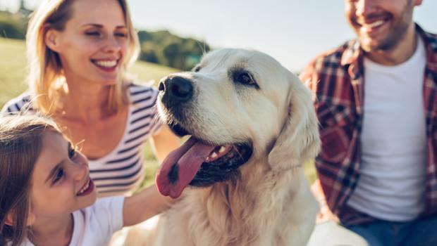 curiosidades sobre los perros