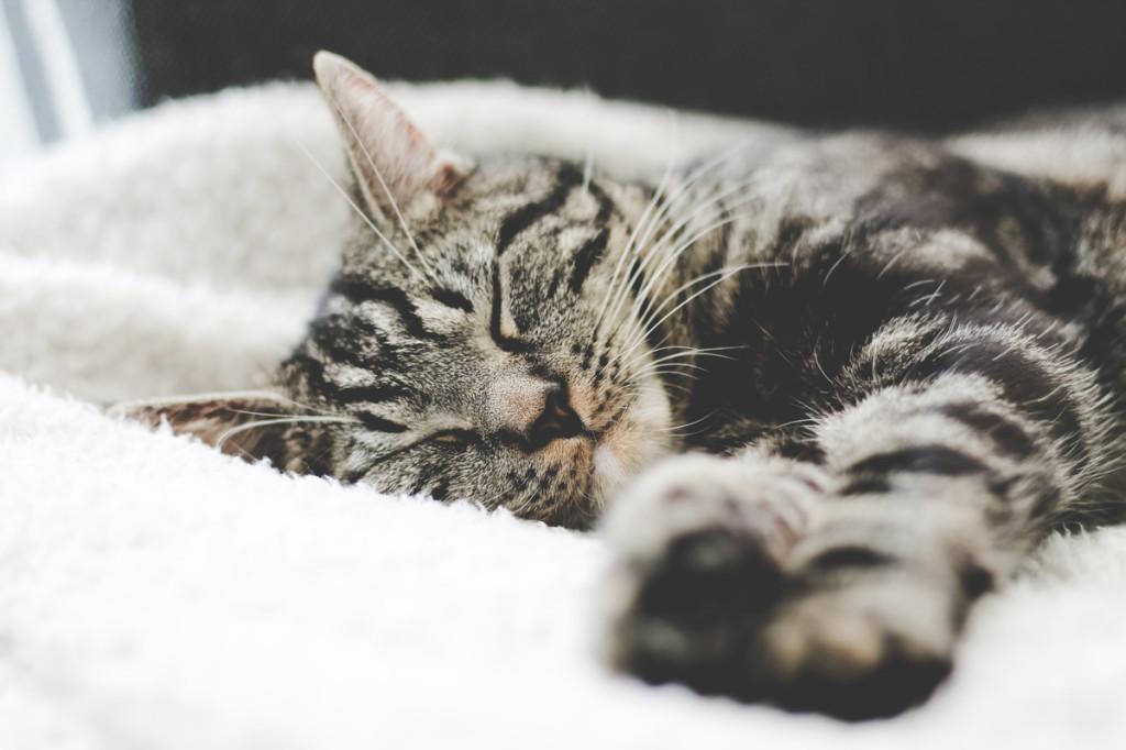 beneficios-de-vivir-con-gato-2