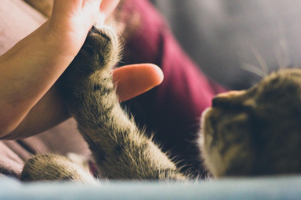 beneficios-de-vivir-con-gato-3