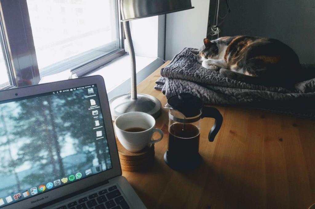 beneficios-de-vivir-con-gato-4