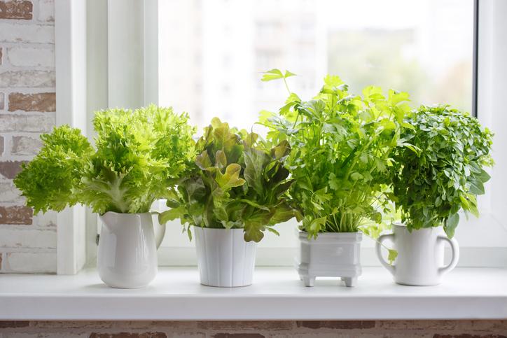 7 beneficios de tener plantas en casa