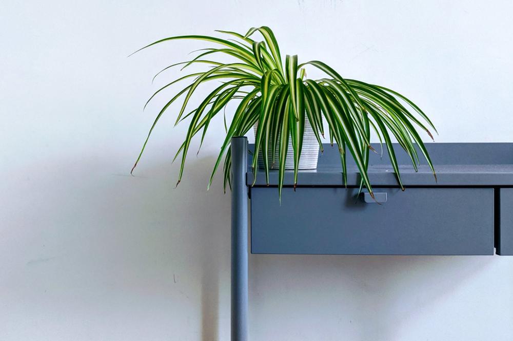 Propietats_Plantes_Decoració