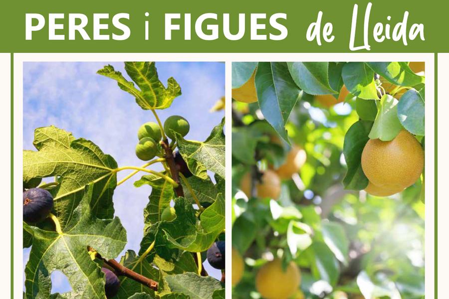 Peres_Figues_Lleida