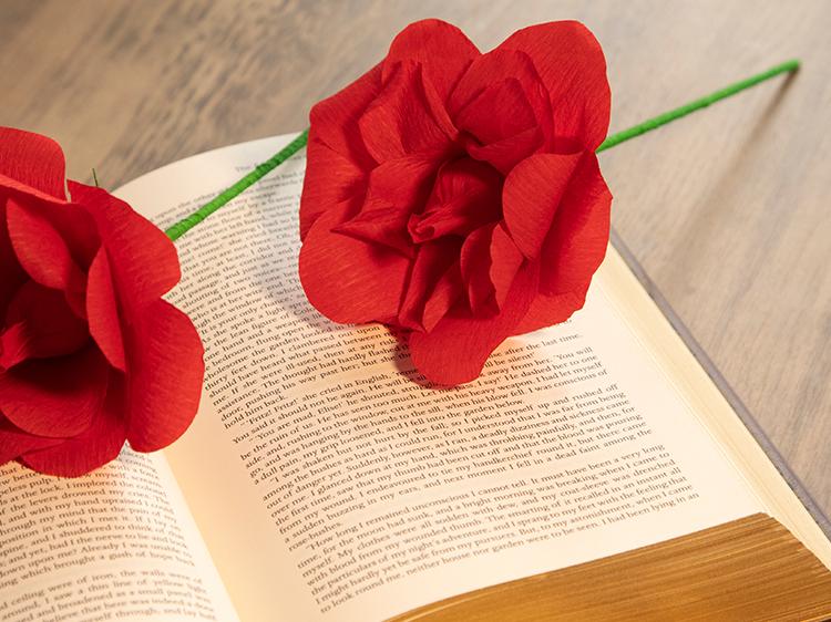 Pim Pam Pum - Roses de Sant Jordi