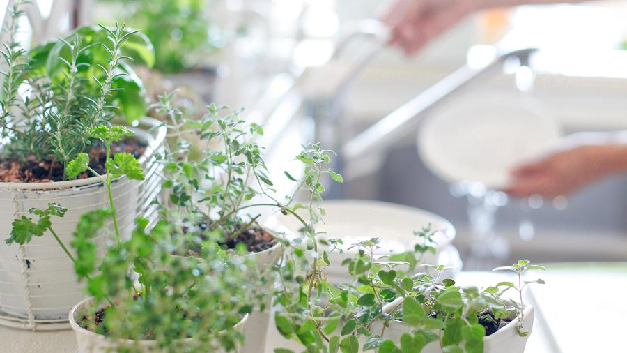 Crea un huerto urbano en tu cocina