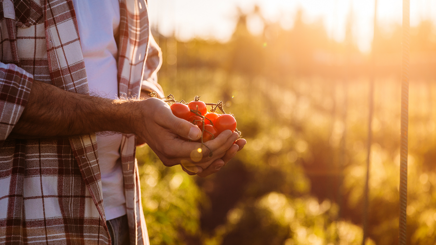 Imprescindible en nuestra cocina: ¡el tomate!