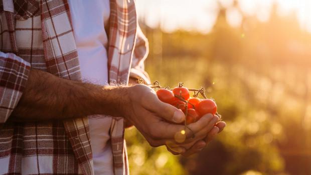 Imprescindible: el tomate